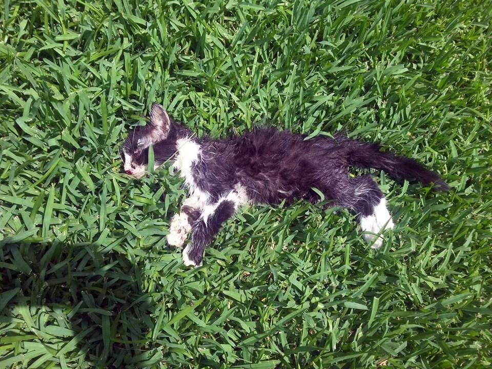Antalya'da kedilere pitbull saldırısı