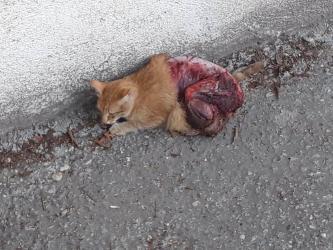 Antalya'da kediye vahşet