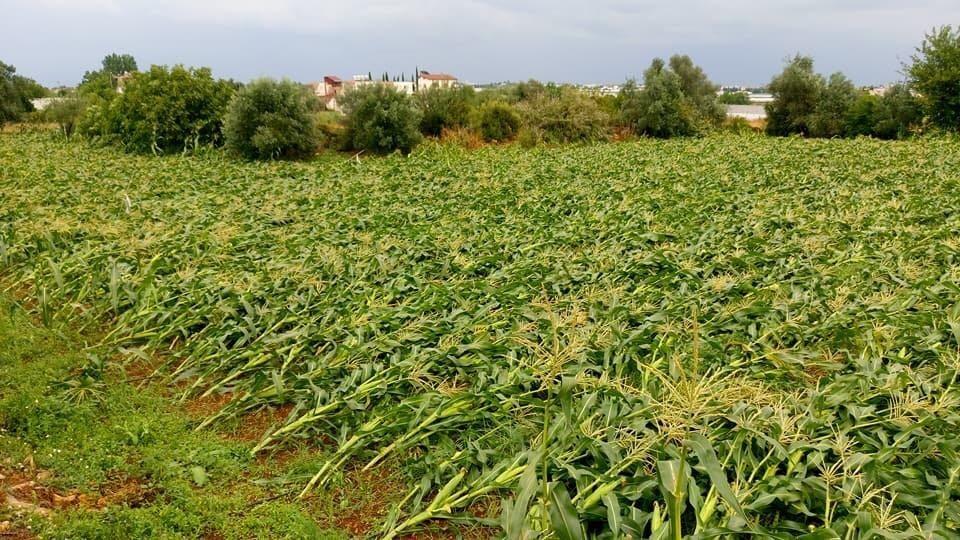 Antalya'da mısır üreticisini dolu vurdu