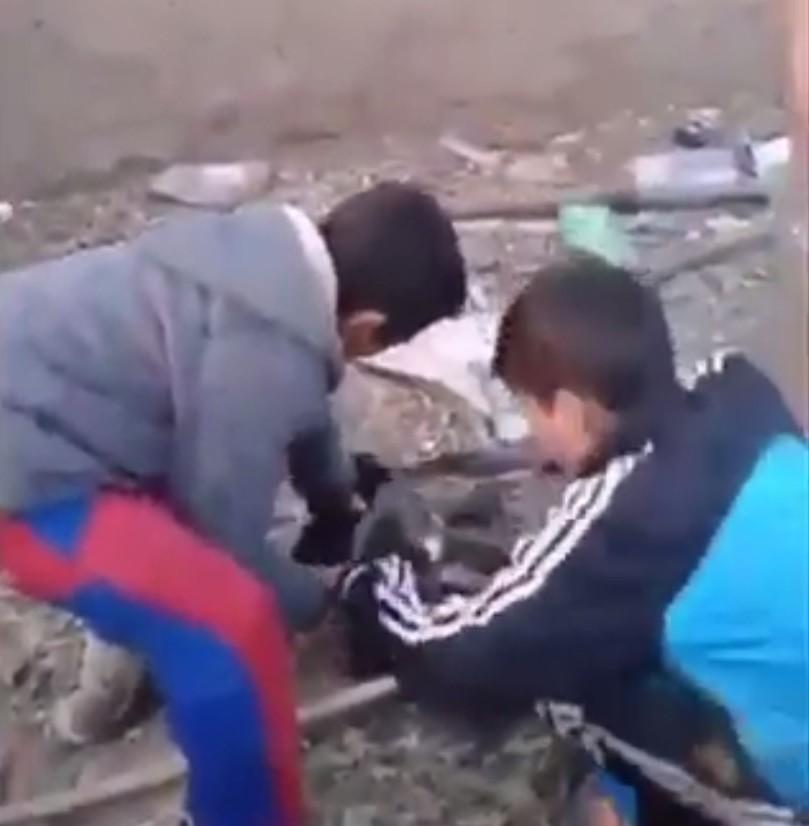 Sakarya'daki yavru köpeğe benzer işkence görüntüsü