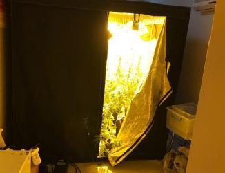 Apartman dairesinde uyuşturucu serası
