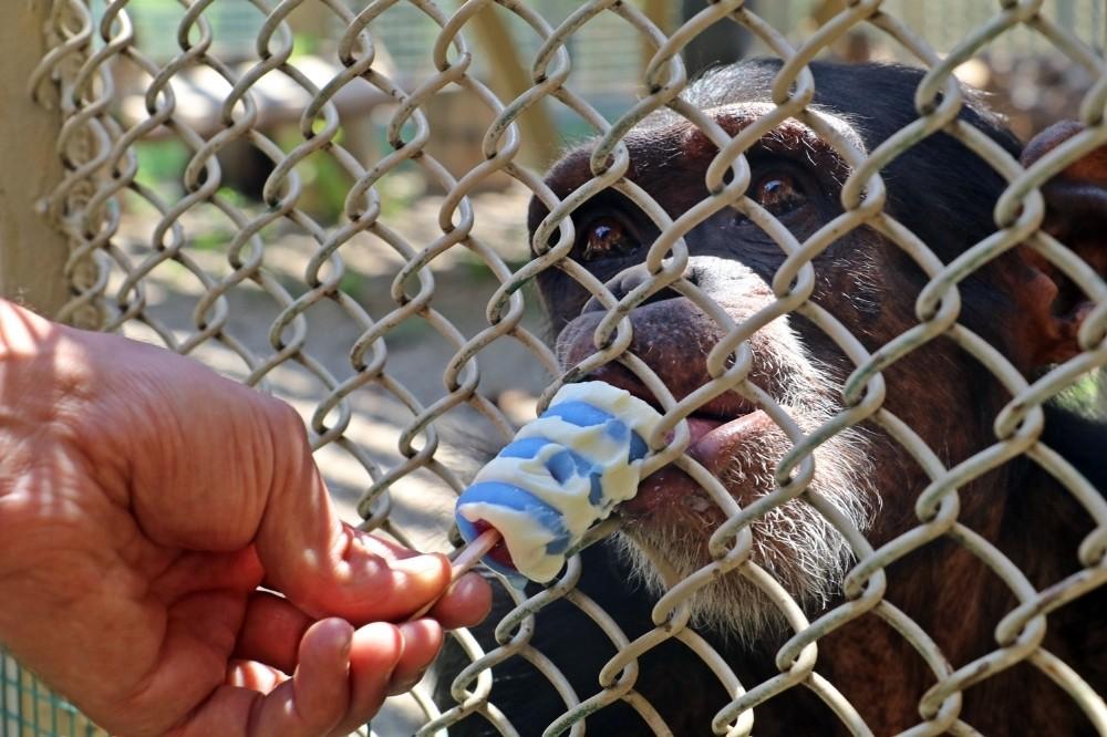 Hayvanat bahçesinde buzlu meyve ve dondurma servisi
