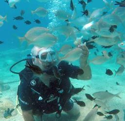 Turistlerin yeni gözdesi su altında ekmekle balık beslemek