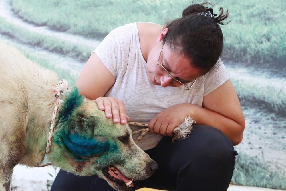 Antalya'da çoban köpeği tabanca ile vuruldu