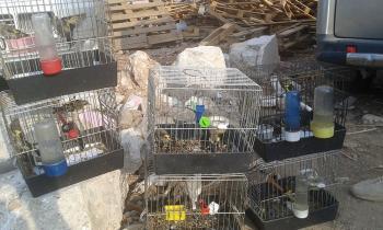 Antalya'da saka kuşu satanlar yakalandı