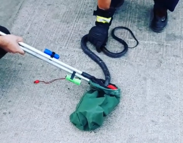 Hastane bahçesinde kara yılan yakalandı