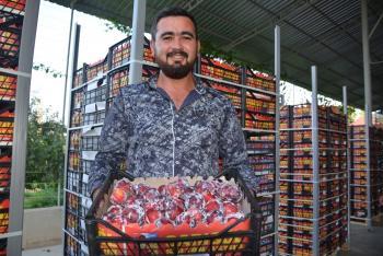 Korkuteli, Rusya ve Dubai'ye Erik ile Armut ihraç ediyor