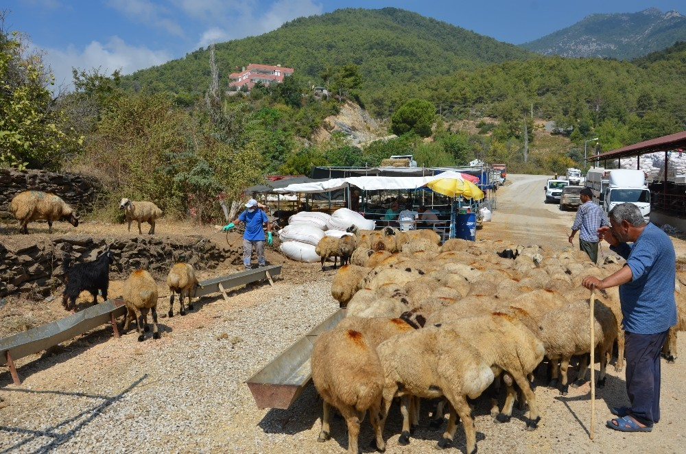 Manavgat ve Alanya'da bayram öncesi ilaçlama seferberliği