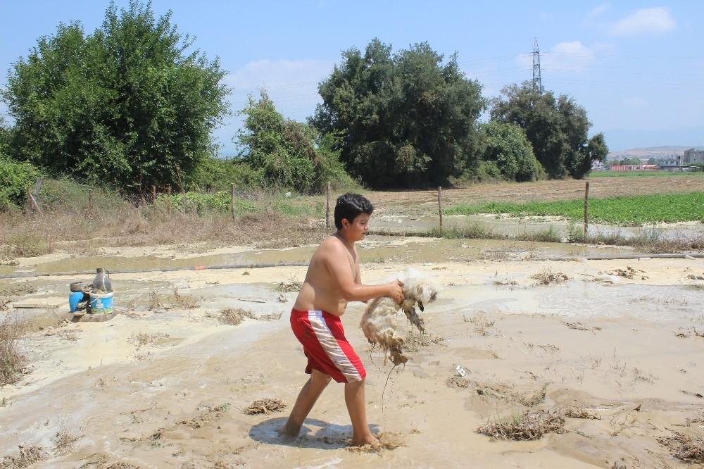 Patlayan içme suyu hattı koyunların bulunduğu ağılı sular altında bıraktı
