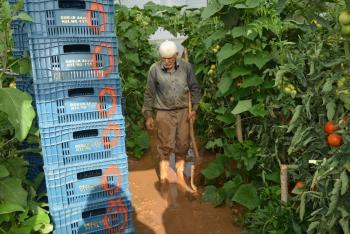Sel sonrası seralara giren üreticileri gördükleri manzara üzdü