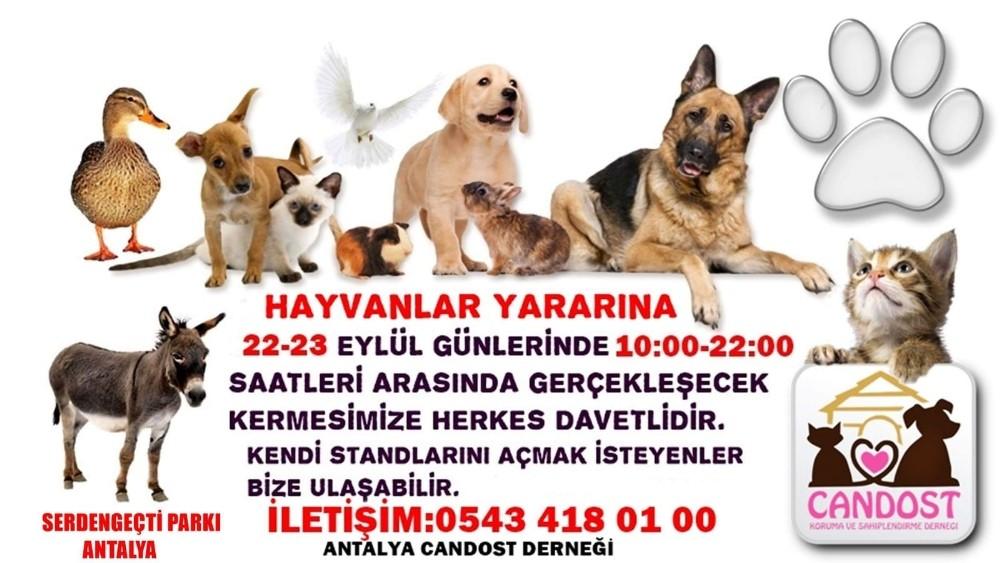 Antalya'da sokak hayvanları yararına kermes düzenlenecek