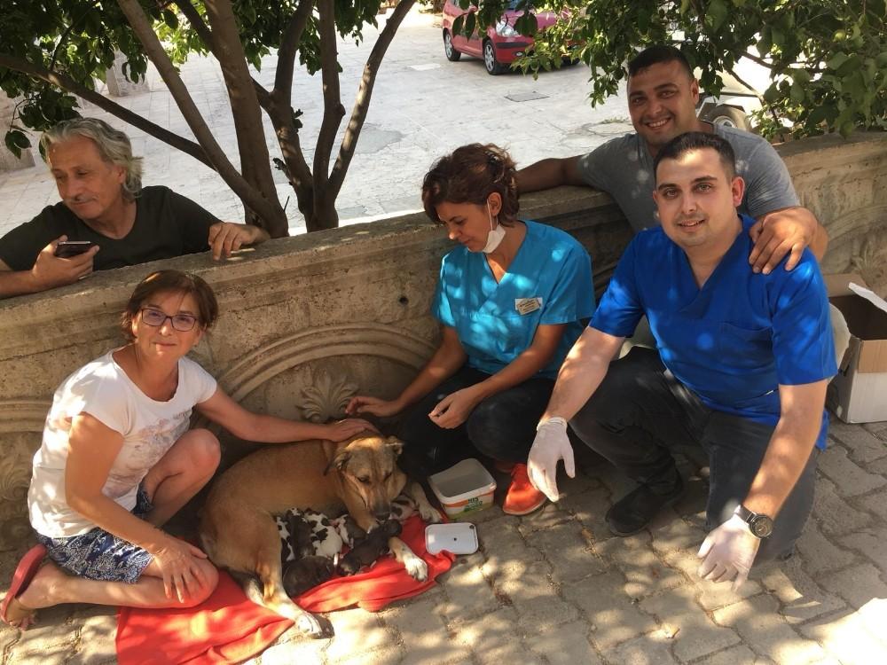 Su borusuna sıkışan yavru köpekler kurtarıldı