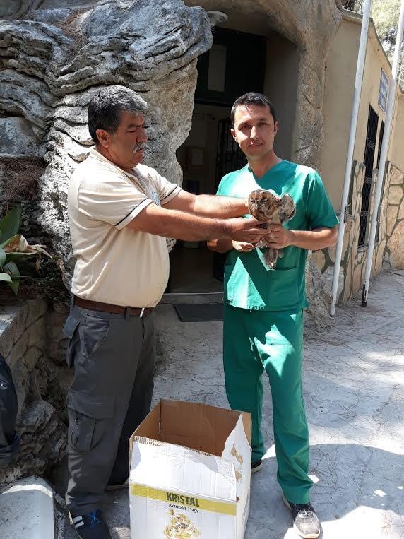 Yaralı olarak bulunan Alaca Baykuş tedavi altına alındı.