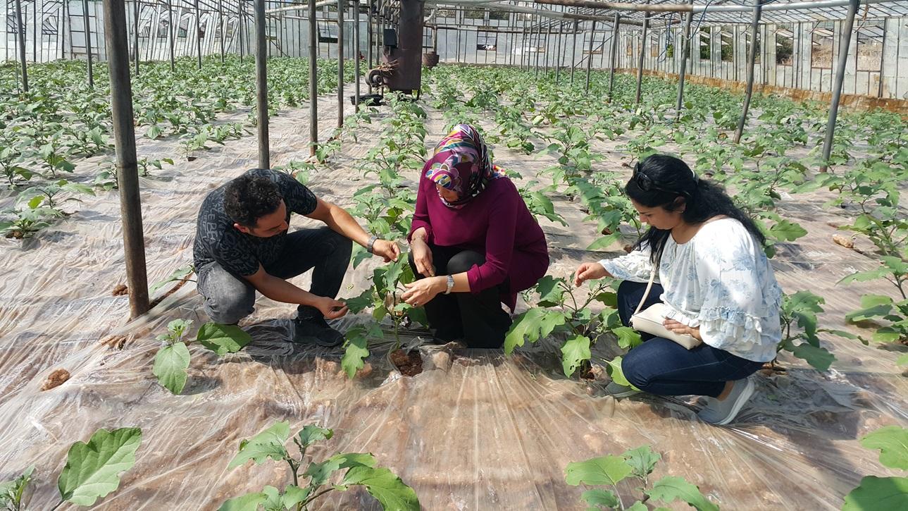 Antalya biyolojik mücadele yapiyor