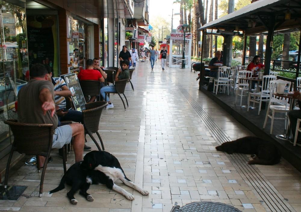 Antalya'da 80 yaşındaki yaşlı adam sokak köpeğinin saldırısına uğradı