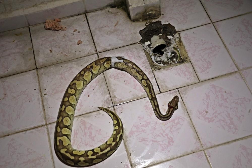 Ev sahibinin balkonda piton yılanıyla burun buruna geldiği anların cezası belli oldu