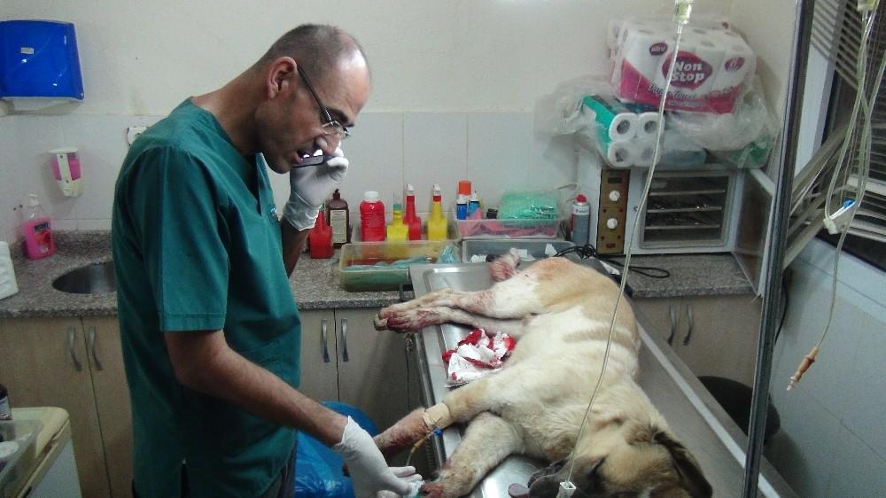Manavgat'ta sokak köpeğin tüfekle vuruldu