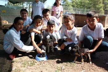 Minik öğrenciler barınaktaki hayvanları besledi