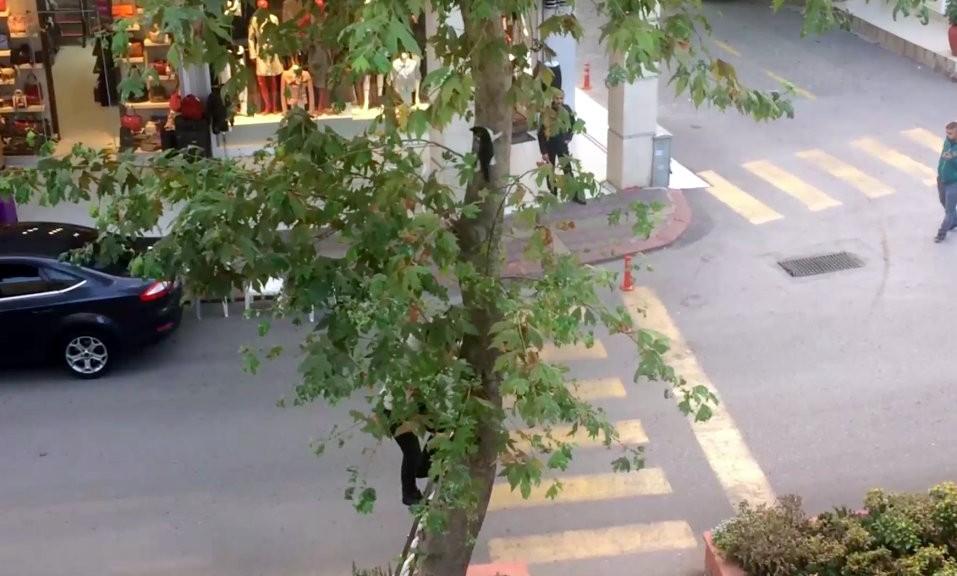 Ağaçta mahsur kalan kediyi kedi gibi ağaca tırmanıp kurtardı