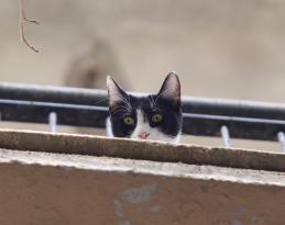 Antalya'da balkondan kedi kurtarma operasyonu