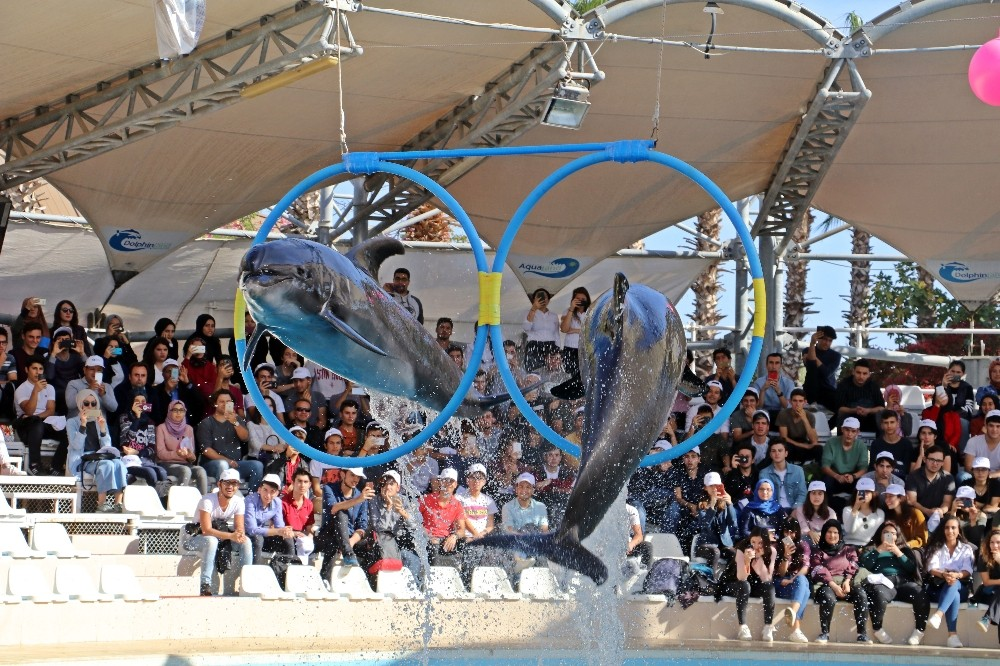 Antalya'da fok ve yunusların muhteşem şovu