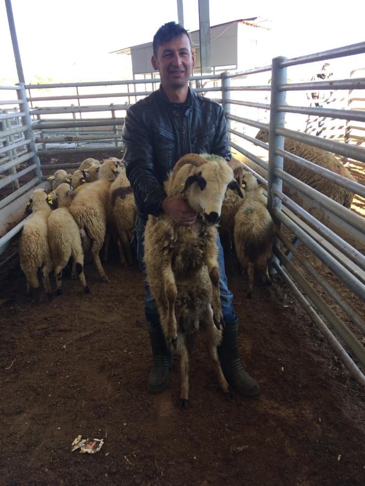 4 genç çiftçiye 136 küçükbaş hayvan desteği