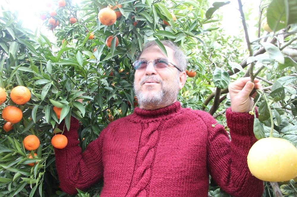 4 ülkenin meyvesini tek ağaçta yetiştirdi, bahçe ziyaretçi akınına uğradı