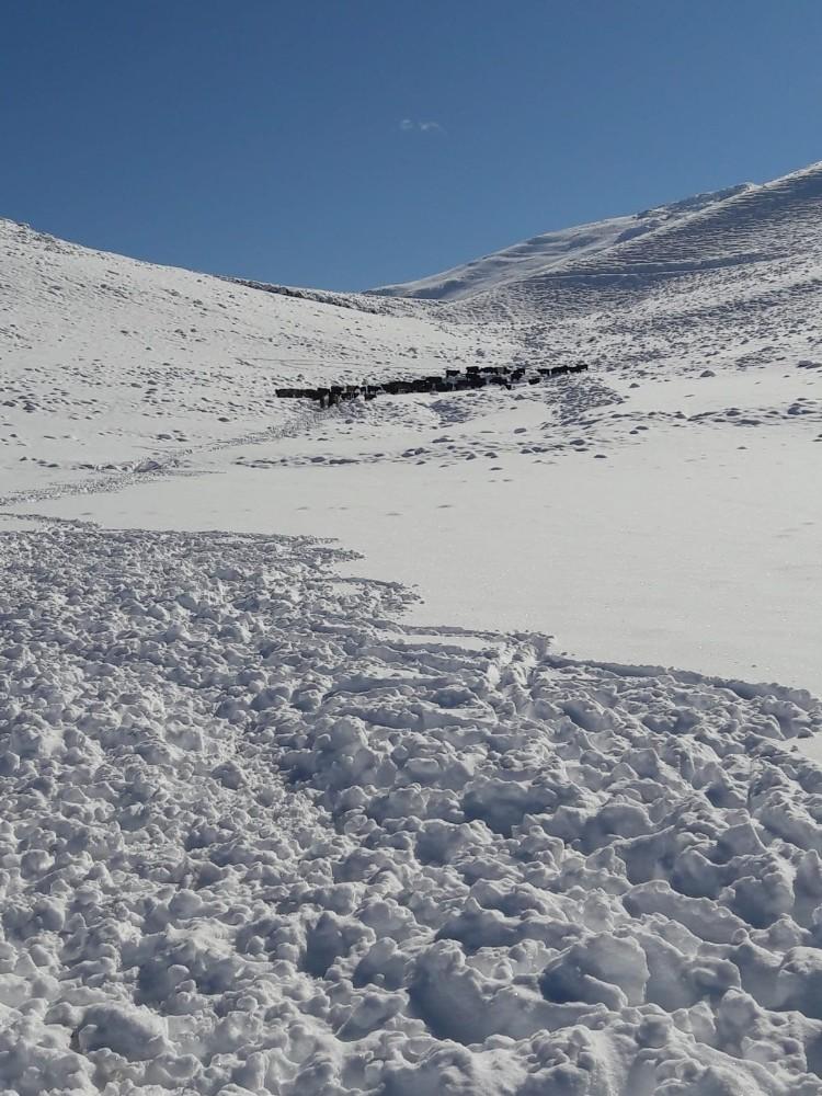 Antalya İmecik Beydağlarında karda mahsur kalan 100 büyükbaş hayvan kurtarıldı