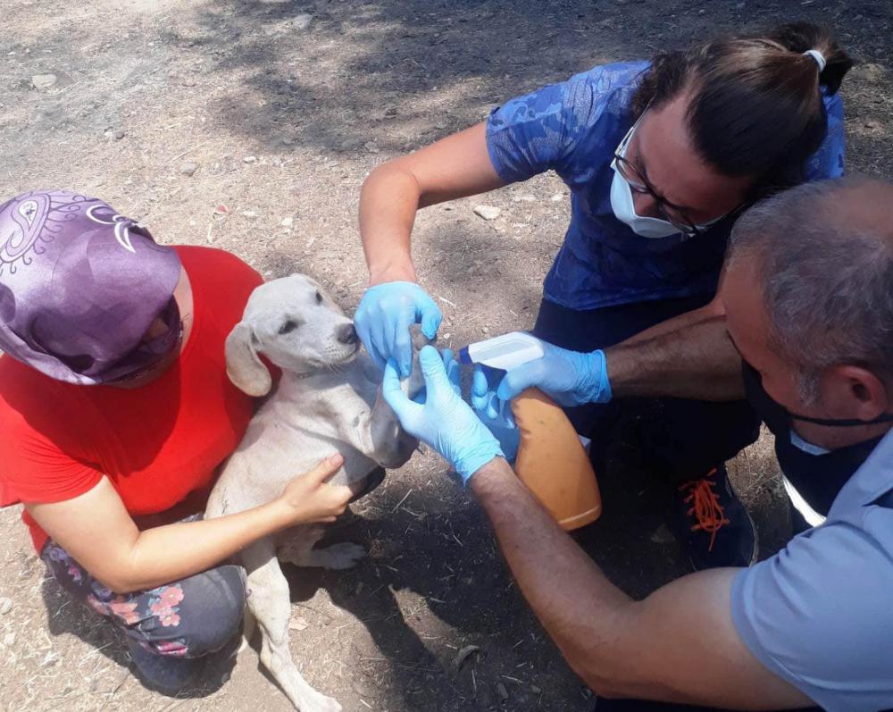 Kepez, Manavgat'ta 2 bin 510 hayvanı muayene etti